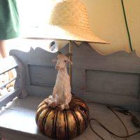 lori rosenberg tischlampe ziege mit goldenem kürbis
